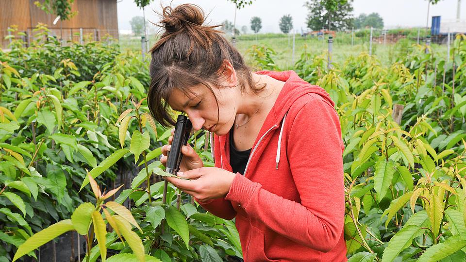 Eine Frau kontrolliert den Zustand eine Pflanze mit einer Lupe.