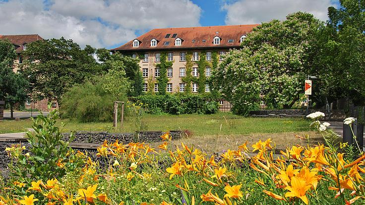Gelbe Blumenwiese vor dem Universitätsgebäude