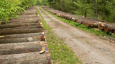 Holzstämme aufgestapelt am Waldweg